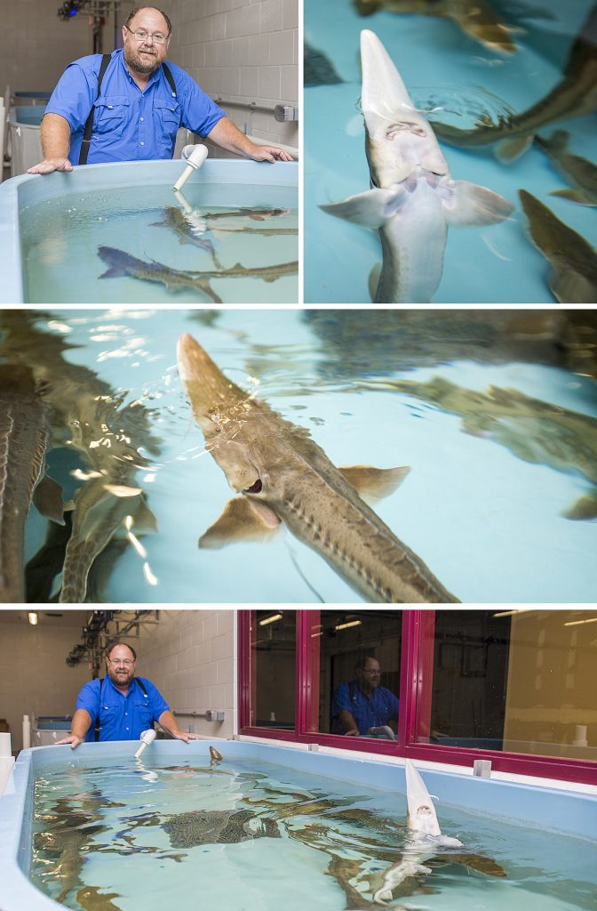 SIU Center for Fisheries, Aquaculture, and Aquatic Sciences