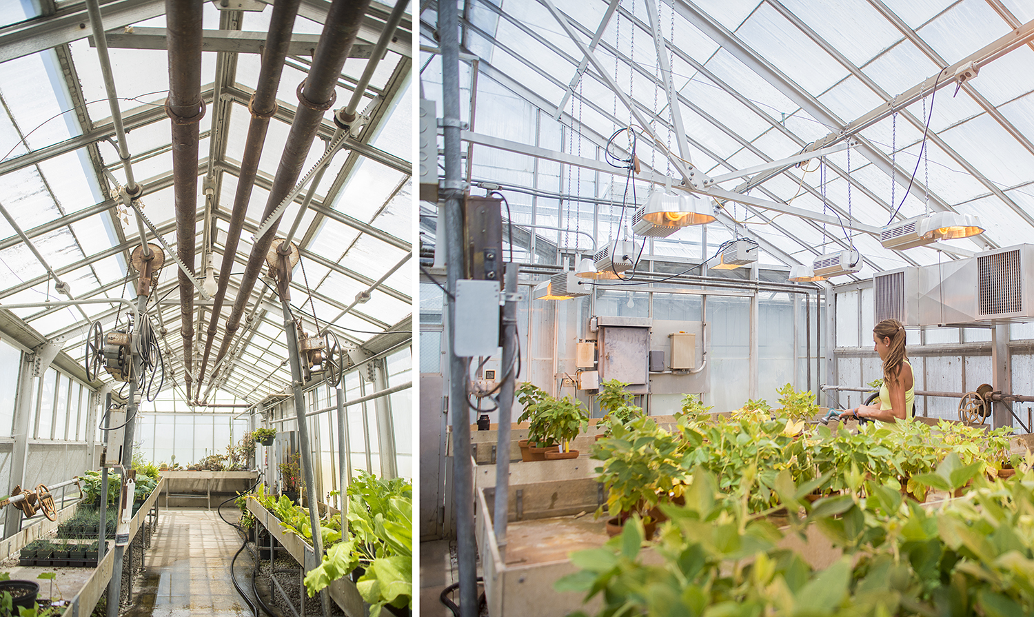 SIU College of Agricultural Sciences Research Greenhouse