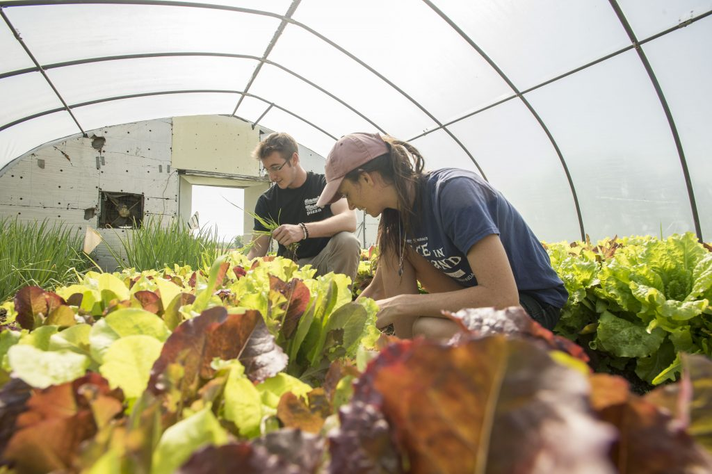 SIU College of Agricultural Sciences Greenhouse